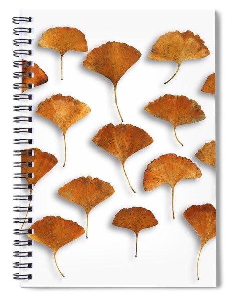 Gingkos Fall Spiral Notebook