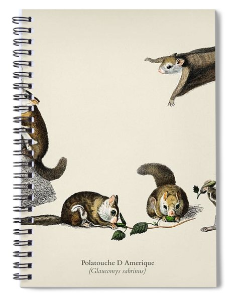 Glaucomys Sabrinus  Polatouche D Amerique  Illustrated By Charles Dessalines D Orbigny  1806 1876  Spiral Notebook