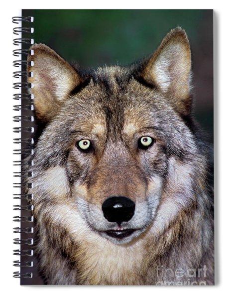 Gray Wolf Portrait Endangered Species Wildlife Rescue Spiral Notebook