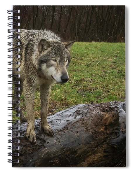 Hangin On The Log Spiral Notebook