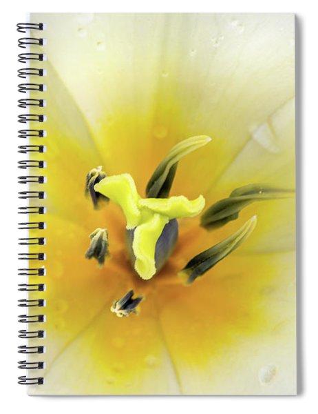 Inside A Tulip Spiral Notebook
