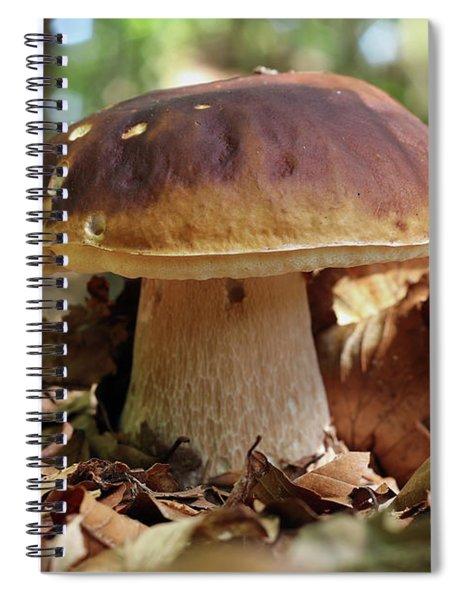 King Boletus - Edible Mushroom Spiral Notebook