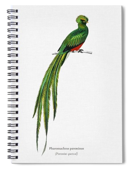 Pavonine Quetzal  Pharomachrus Pavoninus Illustrated By Charles Dessalines D Orbigny  1806 1876 3 Spiral Notebook