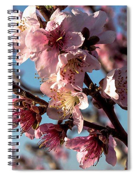 Spiral Notebook featuring the photograph Peach Blossom by Arik Baltinester