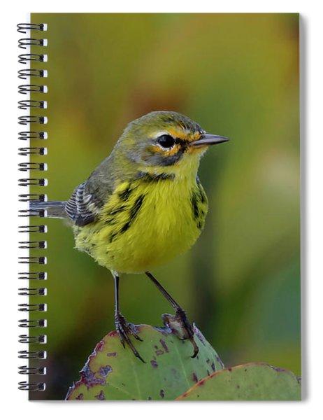 Prairie Warbler Spiral Notebook