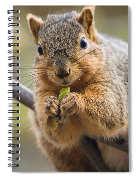Snacking Squirrel Spiral Notebook
