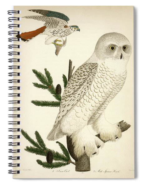 1. Snow Owl. 2. Male Sparrow-hawk. Spiral Notebook