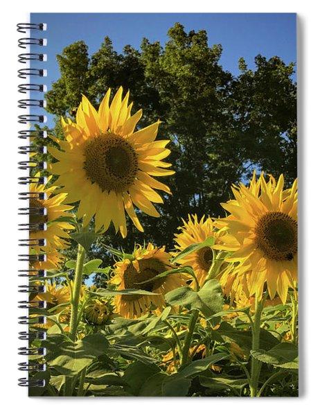 Sunlit Sunflowers Spiral Notebook