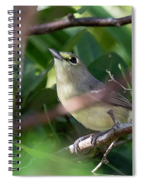 Thick-billed Vireo Spiral Notebook