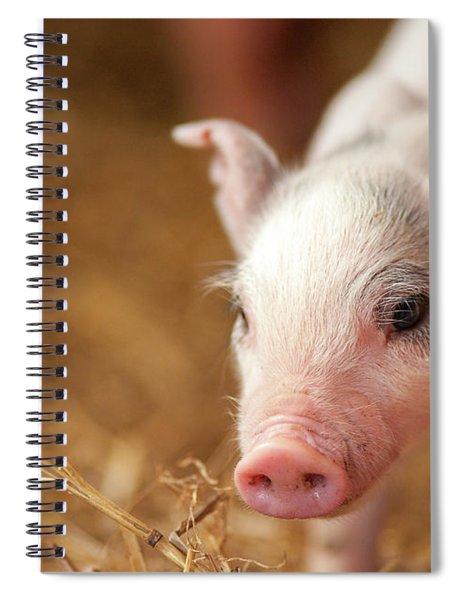 This Little Piggy Spiral Notebook