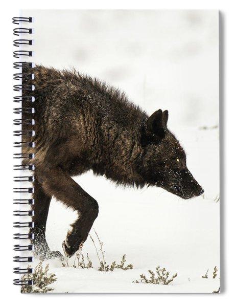 W46 Spiral Notebook