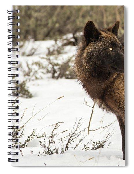 W6 Spiral Notebook