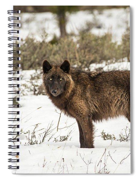 W7 Spiral Notebook