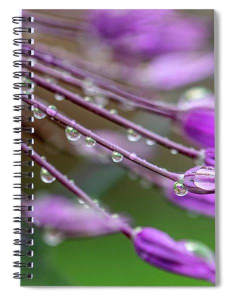 Water Drops On Purple Onion Flower Spiral Notebook