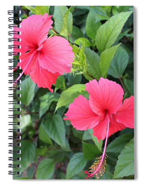 2 Hibiscus Spiral Notebook