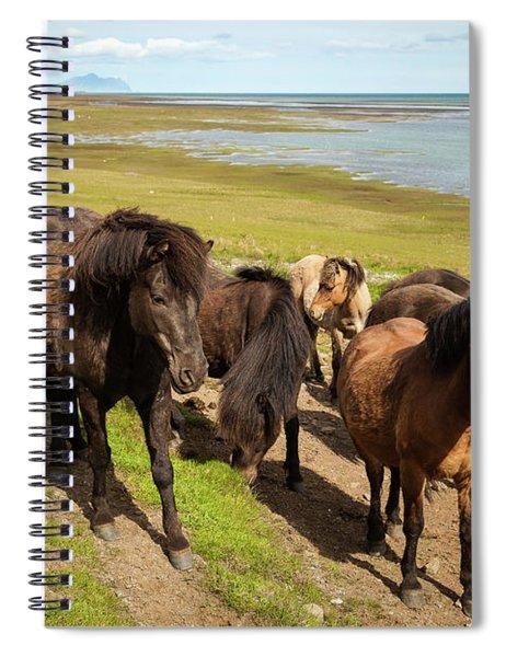 Icelandic Horses Spiral Notebook