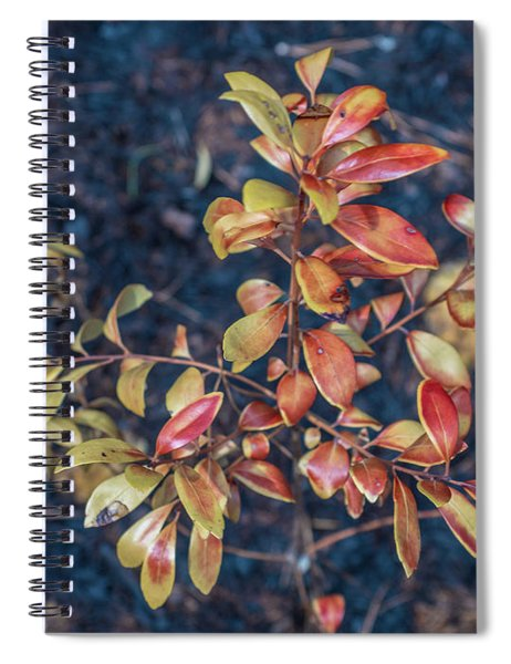 Pine Barrens Burn Spiral Notebook