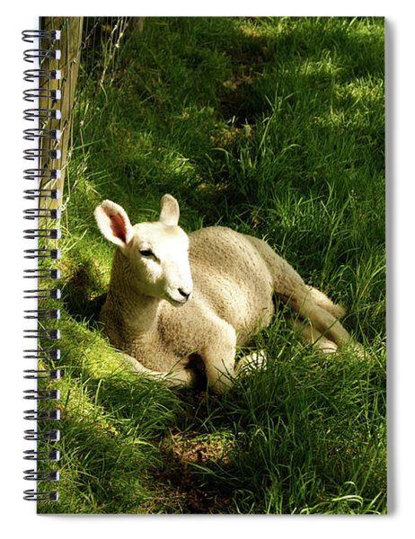 20/06/14  Keswick. Lamb In The Woods. Spiral Notebook