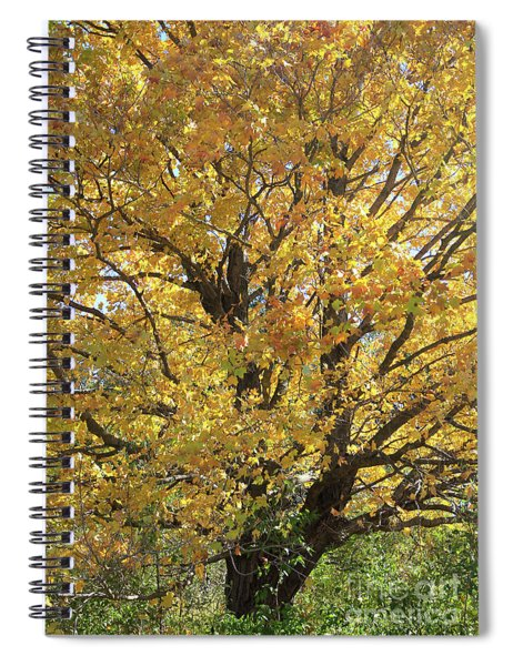 2018 Edna's Tree Up Close Spiral Notebook