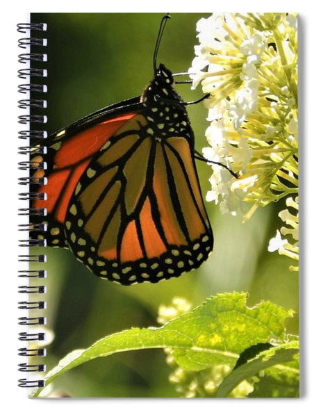 M White Flowers Collection No. W12 - Monarch Butterfly Sipping Nectar Spiral Notebook
