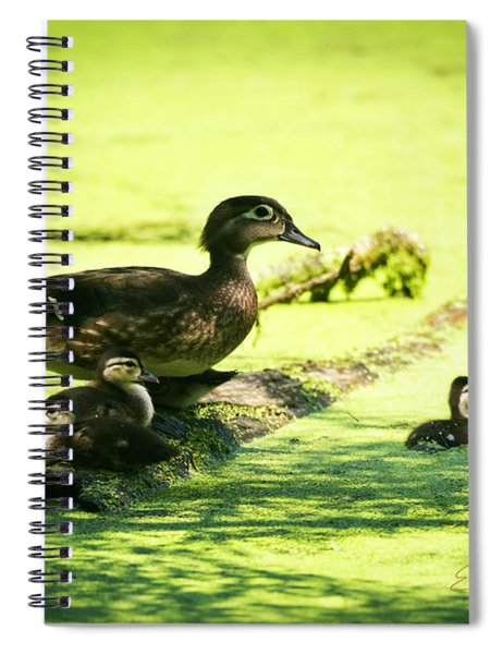 Wood Duck Family Spiral Notebook by Edward Peterson