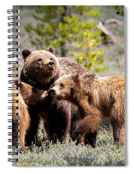 399 And Cubs Spiral Notebook