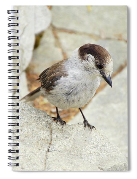 Camprobber - The Gray Jay Spiral Notebook