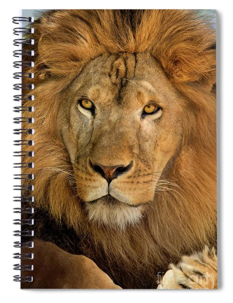 656250006 African Lion Panthera Leo Wildlife Rescue Spiral Notebook by Dave Welling