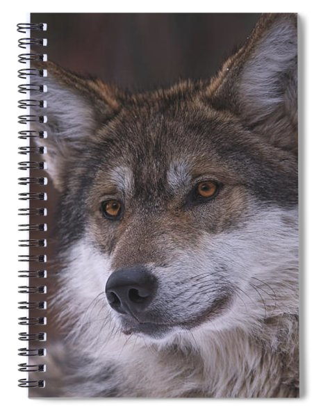 Wolf Spiral Notebook