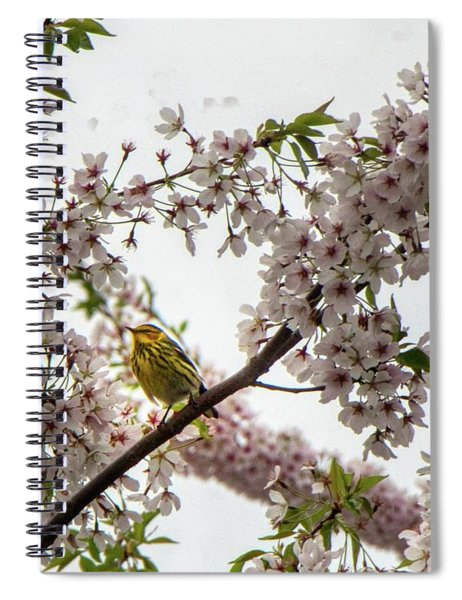 A Canary In A Cherry Tree  Spiral Notebook