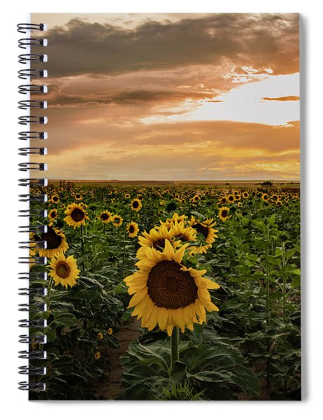 A Field Of Sunflowers At Sunset Spiral Notebook
