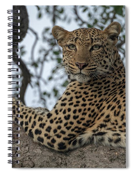 A Leopard Gazes From A Tree Spiral Notebook