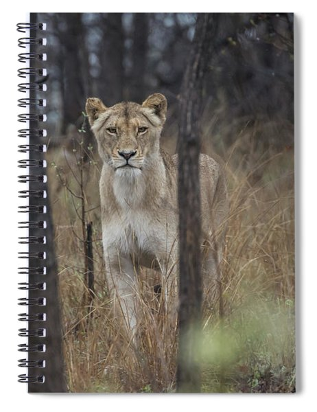 A Lioness In The Trees Spiral Notebook