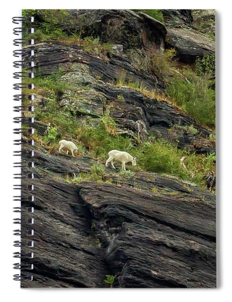 A Mother Mountain Goat And Her Kid Above Avalanche Lake Spiral Notebook by Belinda Greb