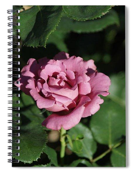 A New Rose Spiral Notebook