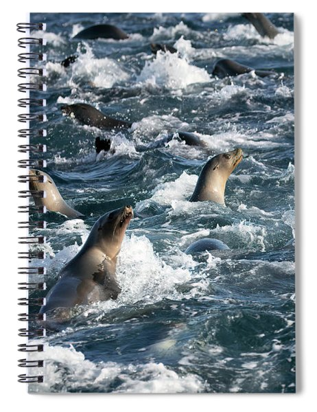 A Raft Of Sea Lions Spiral Notebook