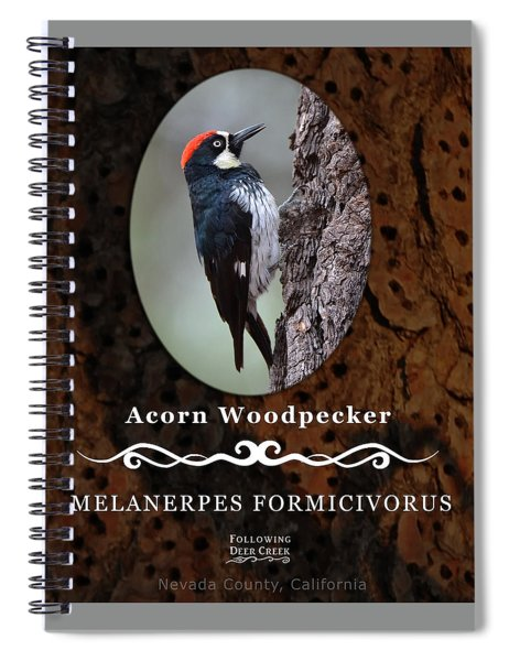 Acorn Woodpecker Granary Tree Spiral Notebook