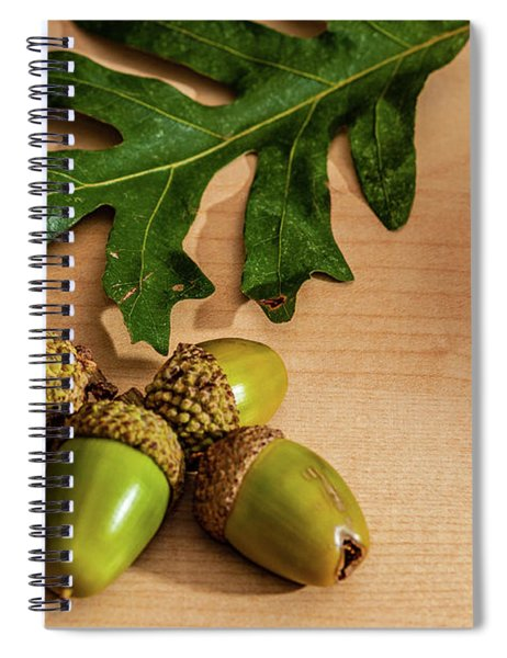 Acorns From The Salem Oak Tree Spiral Notebook by Louis Dallara