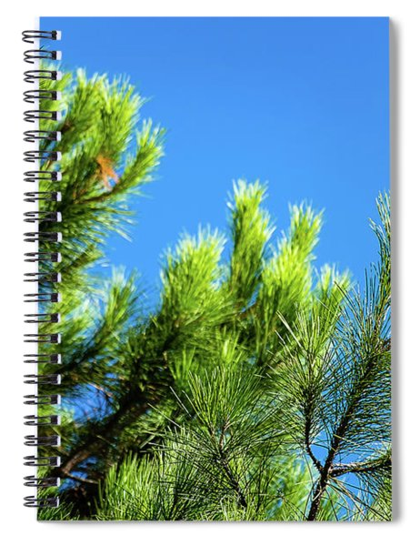 Adriatic Pine Against Blue Sky  Spiral Notebook