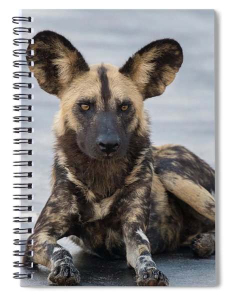 African Wild Dog Resting On A Road Spiral Notebook
