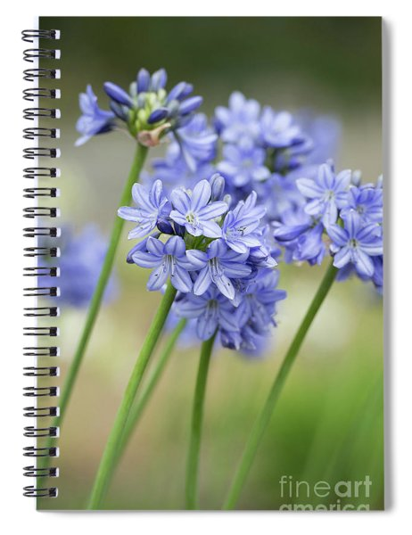 Spiral Notebook featuring the photograph Agapanthus Campanulatus Subsp Patens Portrait Shallow Dof by Tim Gainey