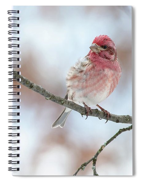 All Fluffed Up And Nowhere To Go Spiral Notebook
