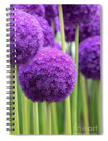 Allium Ambassador Flowers Spiral Notebook by Tim Gainey