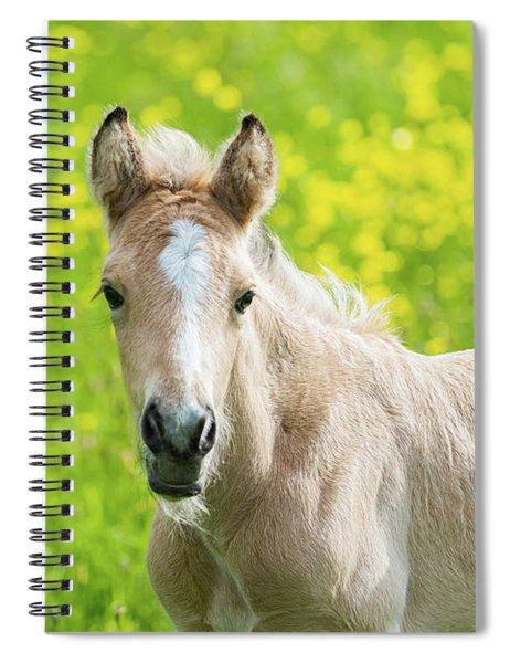 Amber Foal Looking Forward Spiral Notebook by Scott Lyons
