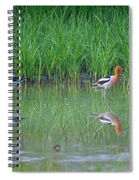 American Avocet Pair Spiral Notebook