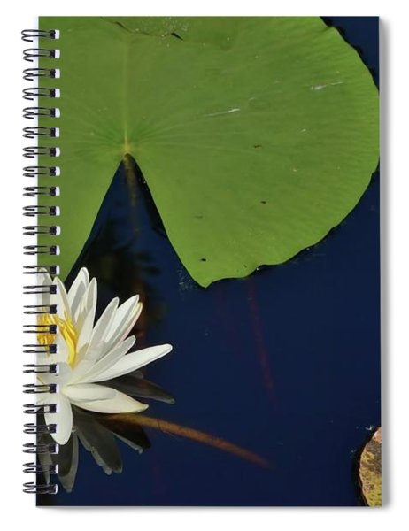 American Water Lily Spiral Notebook