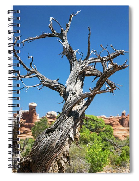 Ancient Dead Juniper With Character Spiral Notebook