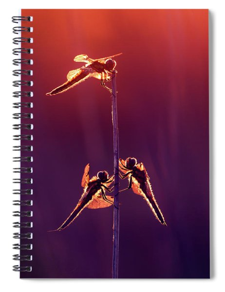 And Then I See A Lightness - Dragonflies At Sunset Spiral Notebook