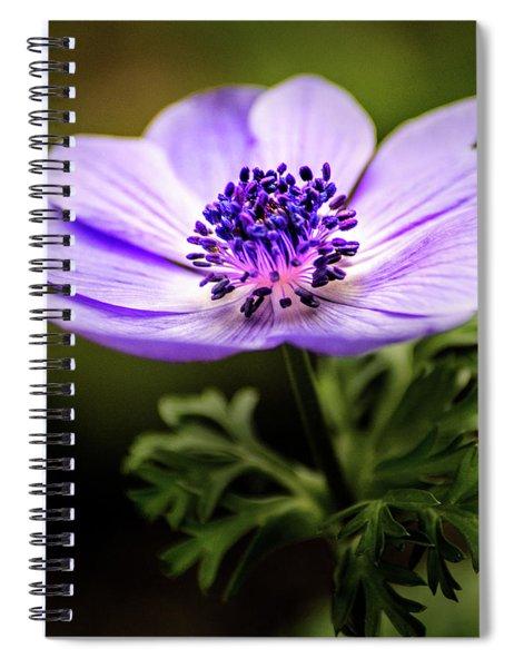 Anemone Wonder Spiral Notebook