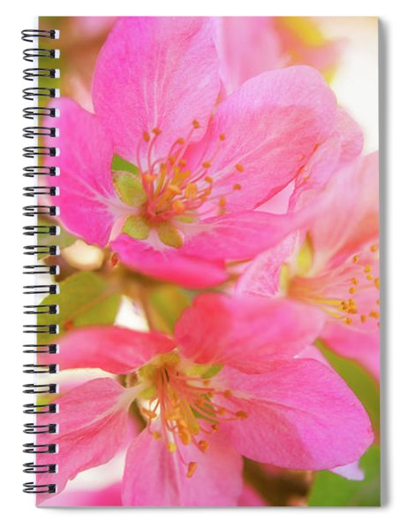 Apple Blossoms Warm Glow Spiral Notebook